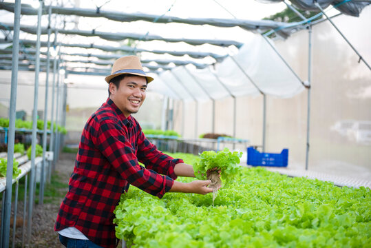 Asian farmers harvest farm produce and fresh vegetables in greenhouses or organic farms for their supply chain and ship them to hydroponic farms.