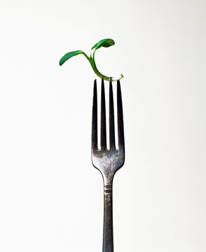 Sunflower sprout on a fork