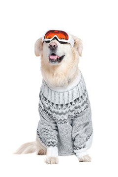Full length picture of a dog in a pullover and ski goggles