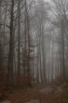 Mystical forest on a foggy day