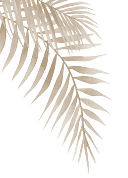 Dried palm leaves. Neutral colored tropical branches. Watercolour illustration isolated on white background.