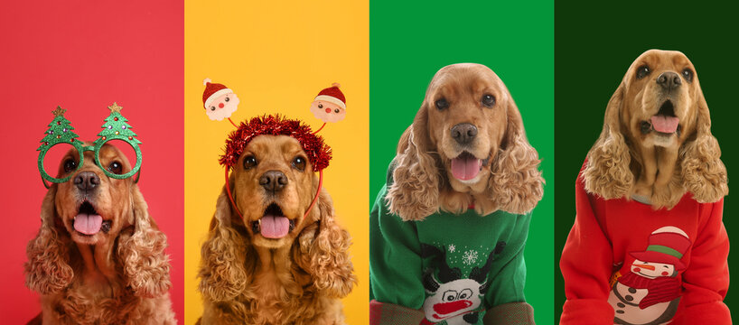 Cute dogs in Christmas sweaters and party glasses on color backgrounds