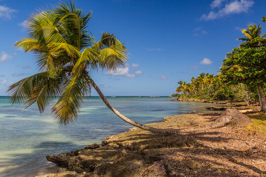 Palm at a beach in Las Galeras, Dominican Republic