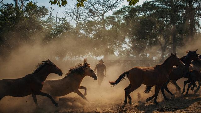hombre llanero en medio del polvo ocasionado por caballos.