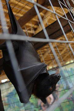 Bat hanging on a tree branch in the cage