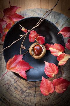 Kastanie mit Herbstblättern