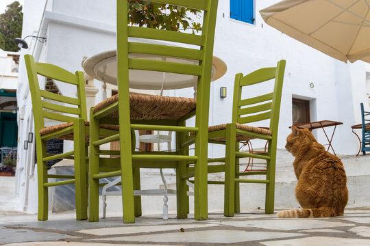 Katze wartet im leeren Restaurant in Pirgos auf der griechischen Kykladeninsel Tinos