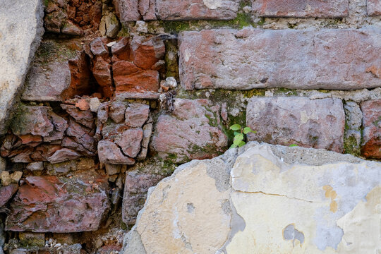 Wall pattern of the ancient structure of buildings in a city. A small plant is growing up between bricks. Geometrical and minimalist design.