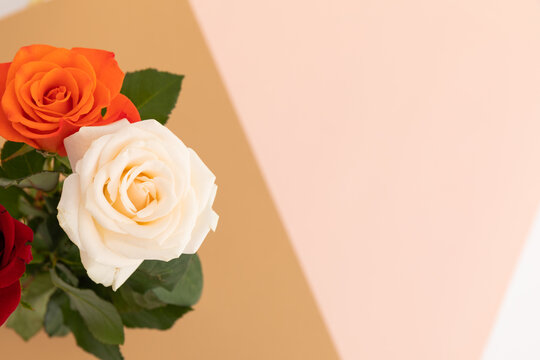 White and orange roses on pink and orange background