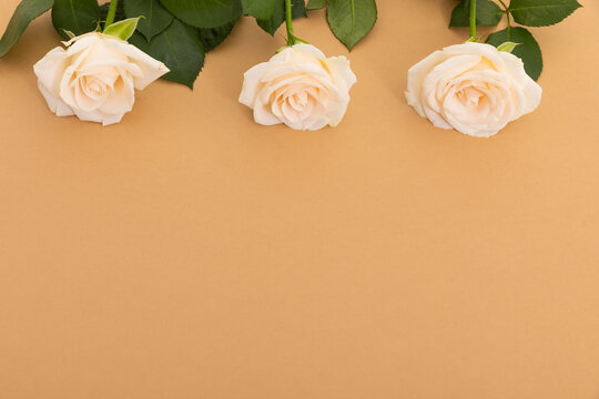 Three white roses at the top on orange background