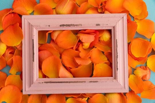Close up of orange rose petals with red rustic frame on blue background