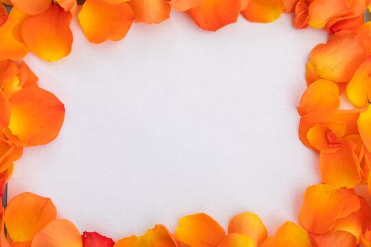 Frame of multiple orange rose petals on white background