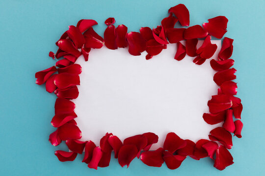 Frame of multiple orange rose petals with white background on blue