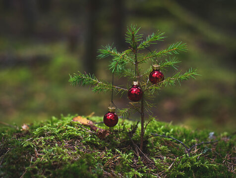 Small Christmas tree in the middle of the forest.