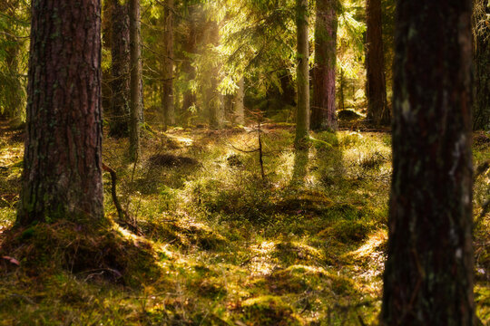Beautiful light in the forest.