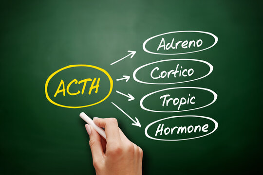 ACTH - Adrenocorticotropic hormone acronym, concept background