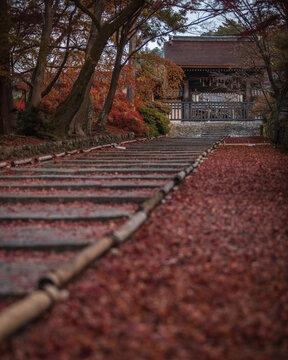 京都府 毘沙門堂門跡 紅葉