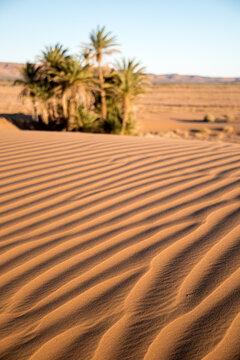 Jeux d'ombre sur les ondulations du sable dunaire