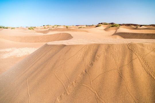 Traces d'insectes gravissant les dunes