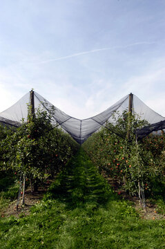 Hail protection in fruit growing