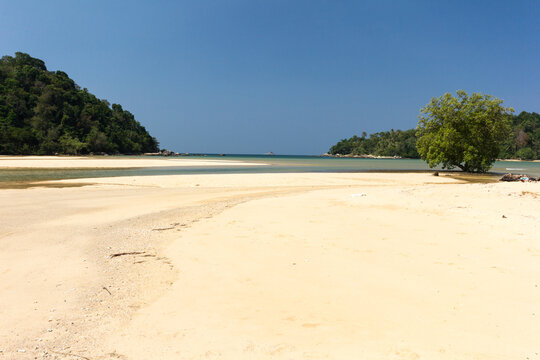 Mangrove tree on the white sand beach at Layan, Bang Tao Bay, Phuket, Thaiand