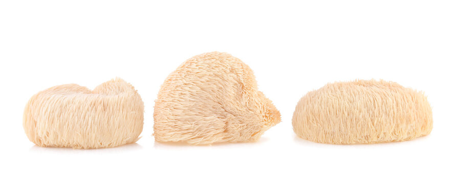 lion mane mushroom isolated on white background