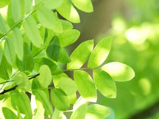 Fototapete - 木漏れ日にかがやく新緑