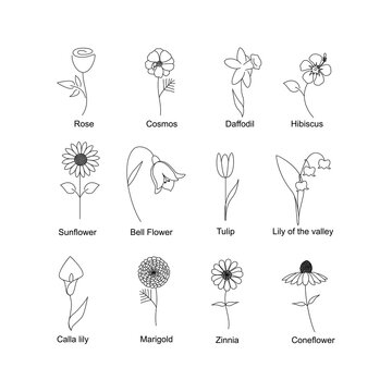 flower line drawing set icon vector