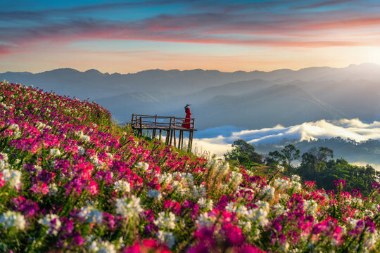 Beautiful girl enjoying at flowers fields and sunrise viewpoint in Tak province.