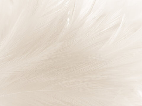 Beautiful abstract gray feathers on white background and soft white feather texture on white pattern and brown background, white texture wallpaper, love theme, valentines day