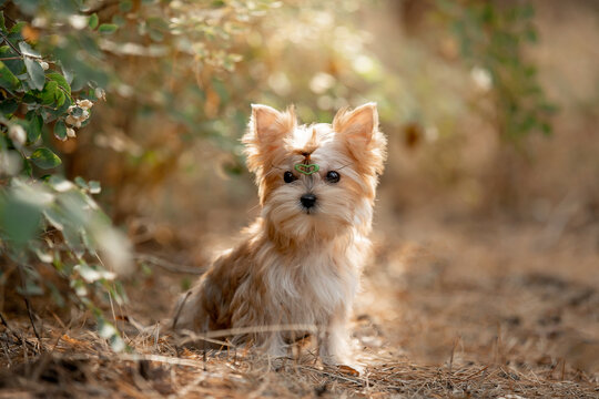 Beautiful little dog running in the forest