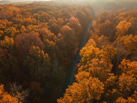 Autumn forest drone aerial shot, Overhead view of foliage trees