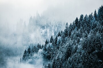 Moody snow covered forest landscape with blue fog and mist in the mountains
