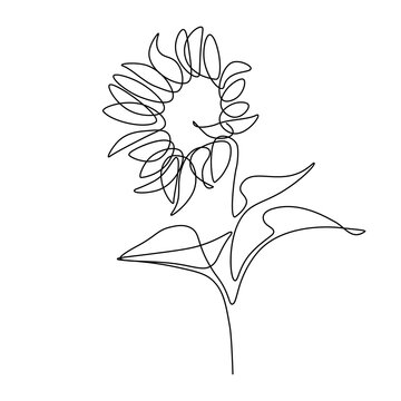 Sunflower in continuous line art drawing style. Black linear sketch isolated on white background. Vector illustration