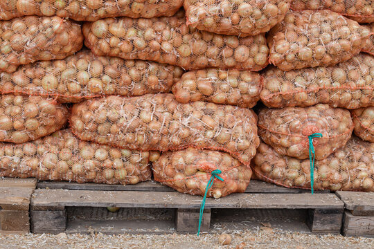onion in a grid on pallets, vegetable warehouse