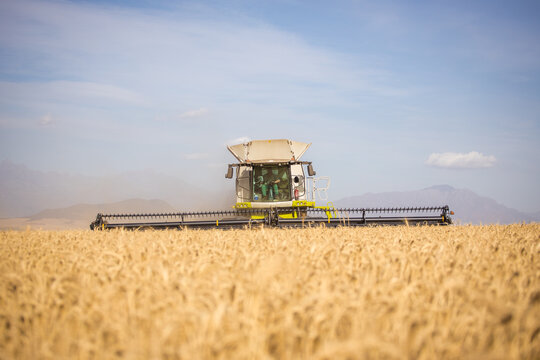 Wide angle view of a combine harvester harvesting wheat on a wheat field on a farm in the Swartland in the Western Cape of South Africa