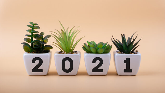 Inscription 2021 on white ceramic flowerpots with houseplants. New ideas in the new year. Merry Christmas and happy new year concept.