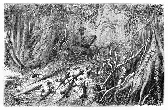Lizards and spiders escaping from ants migration, directed towards a man drawing in brazilian tangled jungle. Ancient grey tone etching style art by Riou, Le Tour du Monde, 1861
