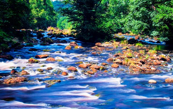 Mountain river in the forest.