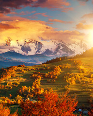 Wall Mural - Morning mountain landscape with colorful forest.