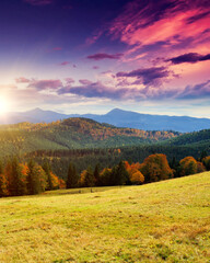 Wall Mural - Majestic morning mountain landscape with colorful forest.