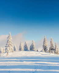 Wall Mural - Awesome winter landscape and covered snow trees. Carpathian, Ukraine, Europe.