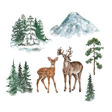Watercolor winter illustration. Wild animals deer and doe, forest, snowy pine trees, mountain, isolated on white background. Christmas cards template. landscape scene.