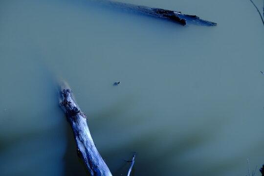 Chillin Turtles Coolin Atchafalaya Basin