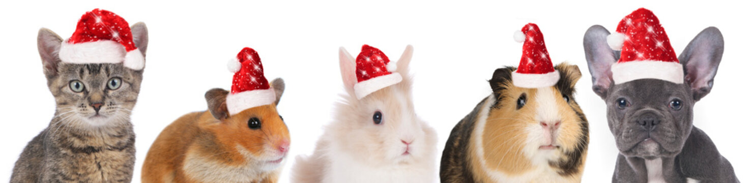 faces of different pets with christmas hats