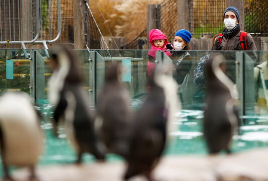 Family wearing face masks look at penguins inside the ZSL London Zoo