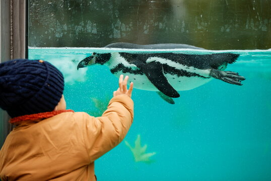 A child looks at a penguin inside the ZSL London Zoo