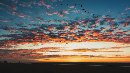 Wall Murals Horses Flocks of geese above the island of Marken with the lighthouse Het Paard van Marken in the background during sunrise