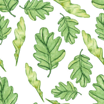 Seamless pattern of green foliage on white background. Watercolor hand drawing illustration of oak leaves. Cute repeat texture for digital paper, print, textile, wrapping, fabric.