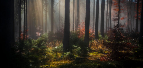 Herbst-Wald am Altkönig, Taunus, Sonnenstrahlen